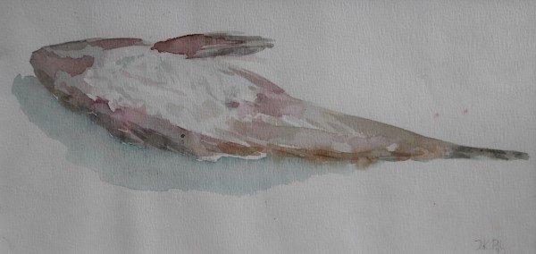 Schilderij | aquarel | strand |vis | dode pieterman | Oscar Pijl | kleine pieterman | zeevis | beach | weever fish | watercolour painting |